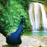 33 водопада, экскурсии в Адлере, экскурсии в Сочи, 33 водопада из Адлера, экскурсия на 33 водопада, экскурсия в Лазаревское, экскурсия тюльпановое дерево