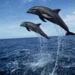 Экскурсии в Адлере, путешествия Адлер, экскурсии Адлер, Экскурсии в Сочи, встреча с дельфинами, встреча с дельфинами в Сочи, встреча с дельфинами в Адлере, в гости к дельфинам сочи, прогулка с дельфинами в сочи
