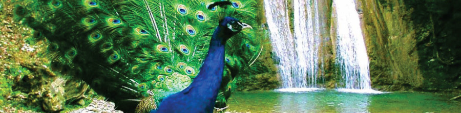 экскурсии в сочи 2021 цены и описание, 33 водопада, экскурсии в Адлере, экскурсии в Сочи, 33 водопада из Адлера, экскурсия на 33 водопада, экскурсия в Лазаревское, экскурсия тюльпановое дерево