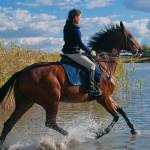 Лошади Адлер, экскурсии на конях Адлер, прогулка в Адлере, Что делать в Сочи, чем заняться в Адлере, Конные прогулки в Сочи, конные прогулки в Адлере, прогулка на лошадях в Сочи, прогулка на лошадях в Адлере, экскурсия на лошадях в Сочи, экскурсия на лошадях в Адлере