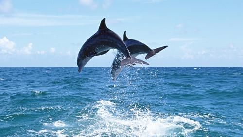Встреча с дельфинами в Сочи и Адлере фото 3