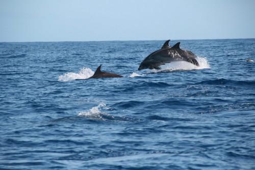 Встреча с дельфинами в Сочи и Адлере фото 2