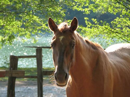 конные прогулки в Адлере и Сочи фото 6