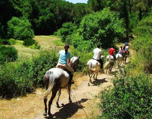 конные прогулки в Адлере и Сочи фото 4