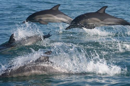 Встреча с дельфинами в Сочи и Адлере фото 1